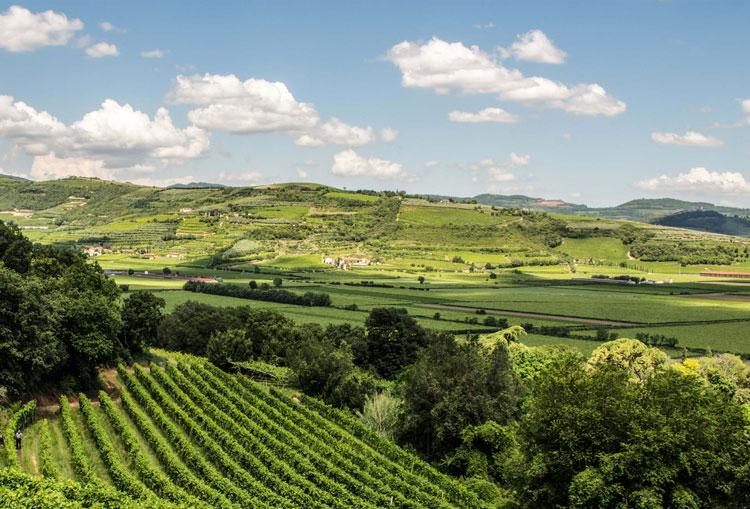 vini-della-valpolicella